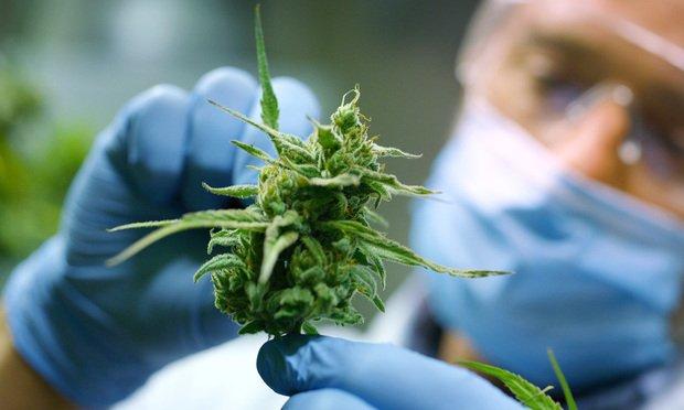 Building a Marijuana Dispensary